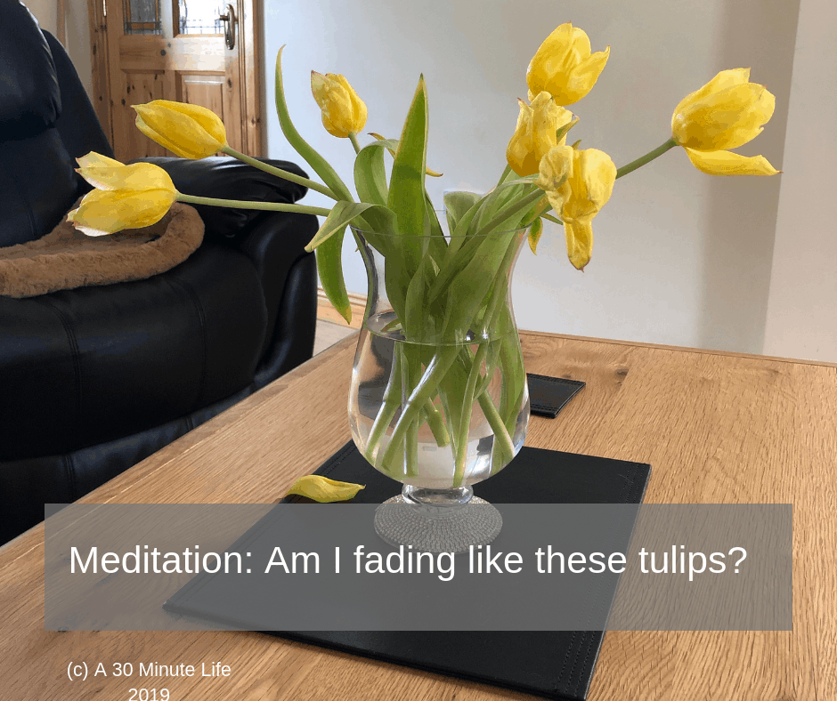 Meditation: Am I fading like these tulips?